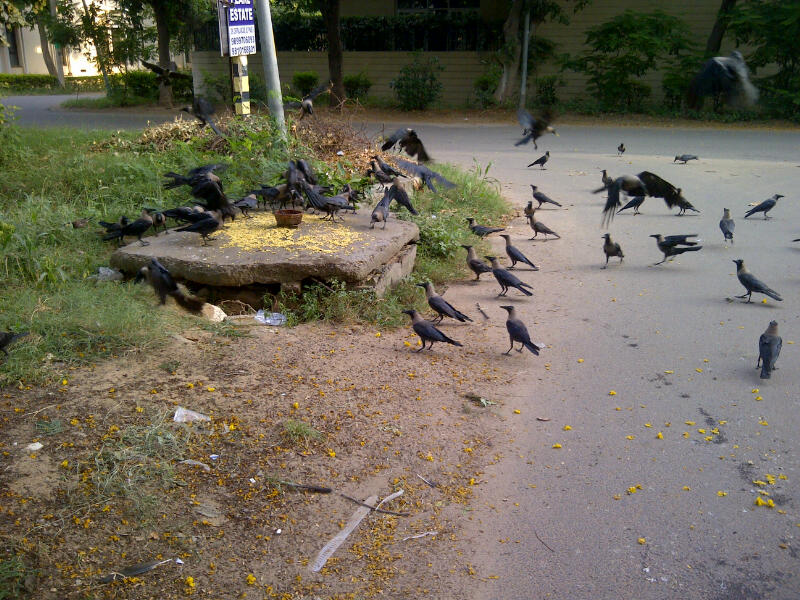 Satanic Rite of Feeding the Crows in India