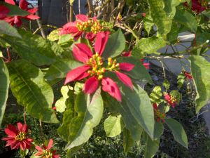 flowername