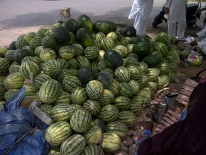 watering mouth watermelons