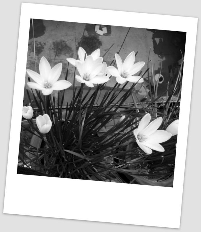 lily postcard1-DSCF9852