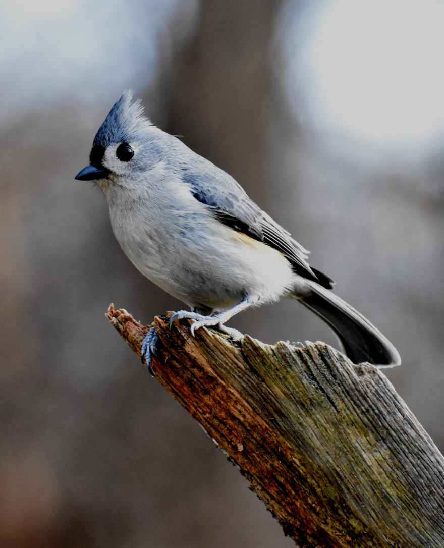 white and blue bird