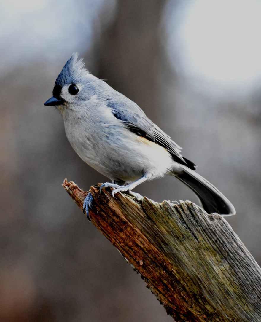 white and blue bird